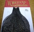 WHITING FARMS HACKLE FEATEHRS ROOSTER CAPE FLYTYING AUSTRALIA TROUTLORE